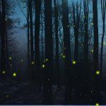 Soirée des lucioles Morvan