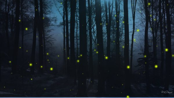 soirée des lucioles